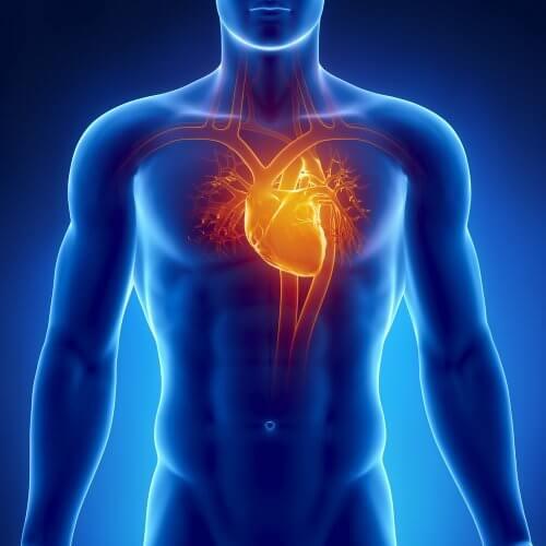 Cardiovascular Health and Hawthorn Berry
